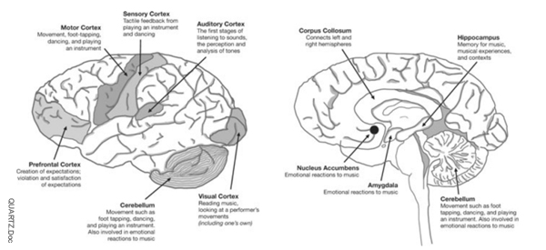Listen to the Brain. QUARTZ.DOC