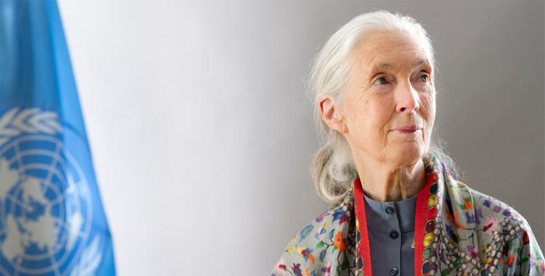 The Dreamer, Jane Goodall