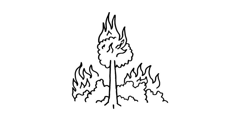 """Amazon """"Wildfire"""""""